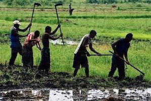Les confiscations des terres tuent les villages. Soutien à Dar el Barka