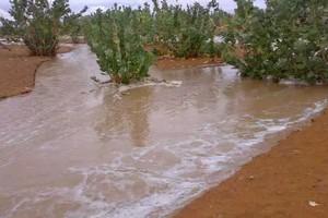 Mauritanie : de faibles précipitations dans l'est du pays