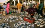 Stock de sécurité de 10.000 tonnes de poissons face aux effets du COVID-19